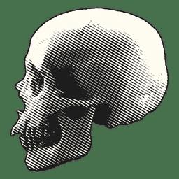 Cráneo asustadizo de la ilustración de Halloween