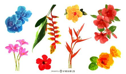 Tropical flowers illustration set