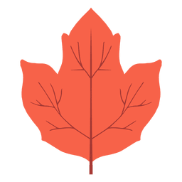 Isolated red autumn leaf