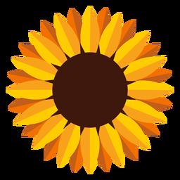 Isolated sunflower head illustration