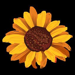 Sunflower head drawing