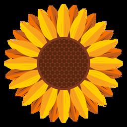 Sunflower head graphic