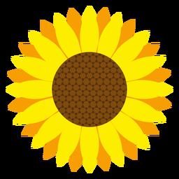 Sunflower head vector