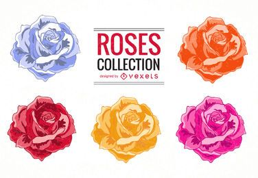 Colorful roses illustration set