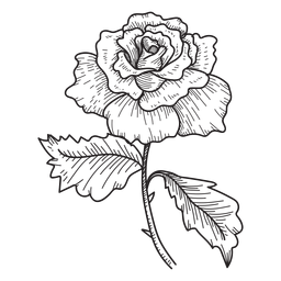 Rose flower sketch icon