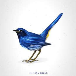 White-bellied redstart drawing