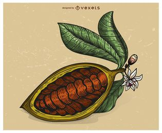Cacao fruit illlustration