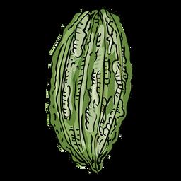 Cocoa tree fruit illustration