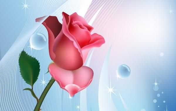 Rose on blue background with water bubbles