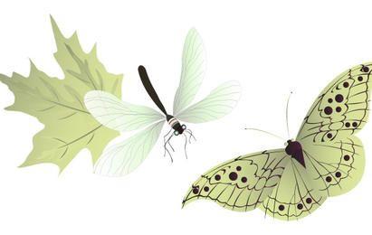 Insectos vectores
