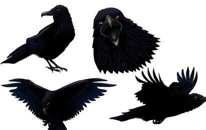 Pájaro del cuervo oscuro