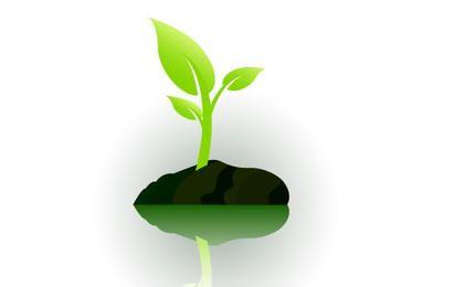 pequeña planta que crece