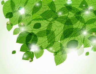 Green Leaves Sunlight Background