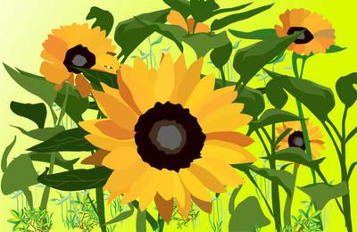 Flouring Plants Background with Sunflowers