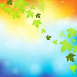 Falling Maple Leaves Colorful Background