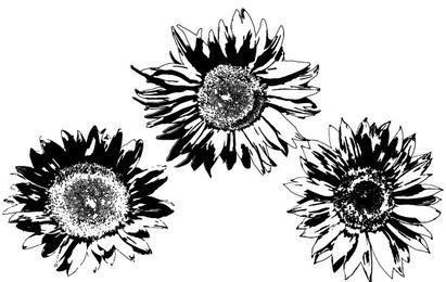 Freie Vektoren: Sonnenblumen
