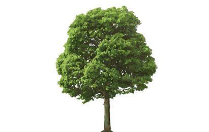 Der isolierte Baum