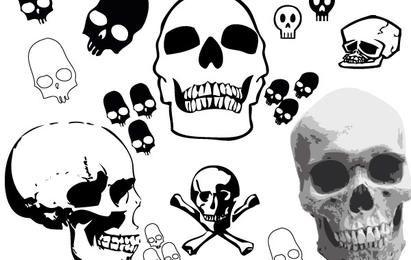 Paquete de cráneo vector libre