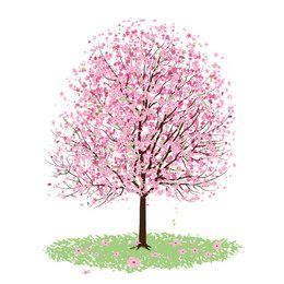 Ilustración de cerezo sobre blanco
