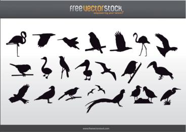 Colección gratuita de siluetas de aves
