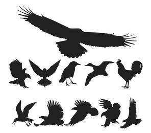 Vector libre paquete de aves
