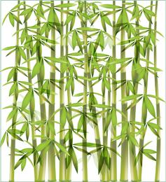 Bambus Hintergrund 1
