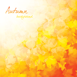 Fundo bonito do outono 4