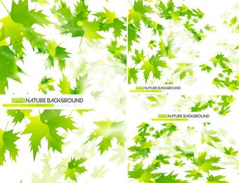 Conjunto de fundos de folhas verdes