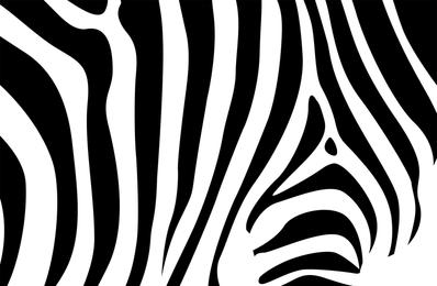 Zebra-Hintergrund