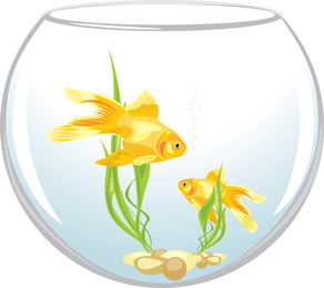 Isolated goldfish on glass bowl