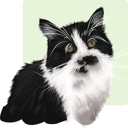 Pet cat illustration design