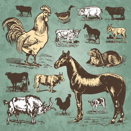 Aves de corral animales vector