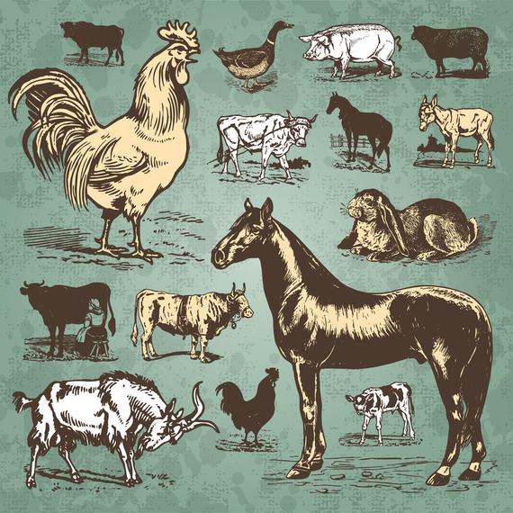 Aves de corral animales vector