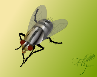 Fly Bug Vector