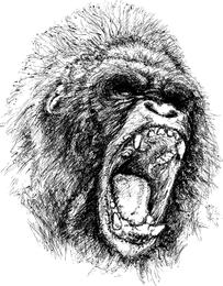 Vector de chimpancé