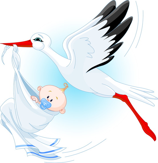 Stork Carrying A Baby Vector Vector Download