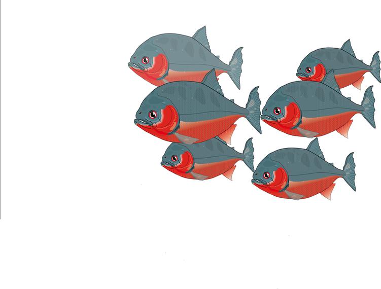 Original de vetor de piranha