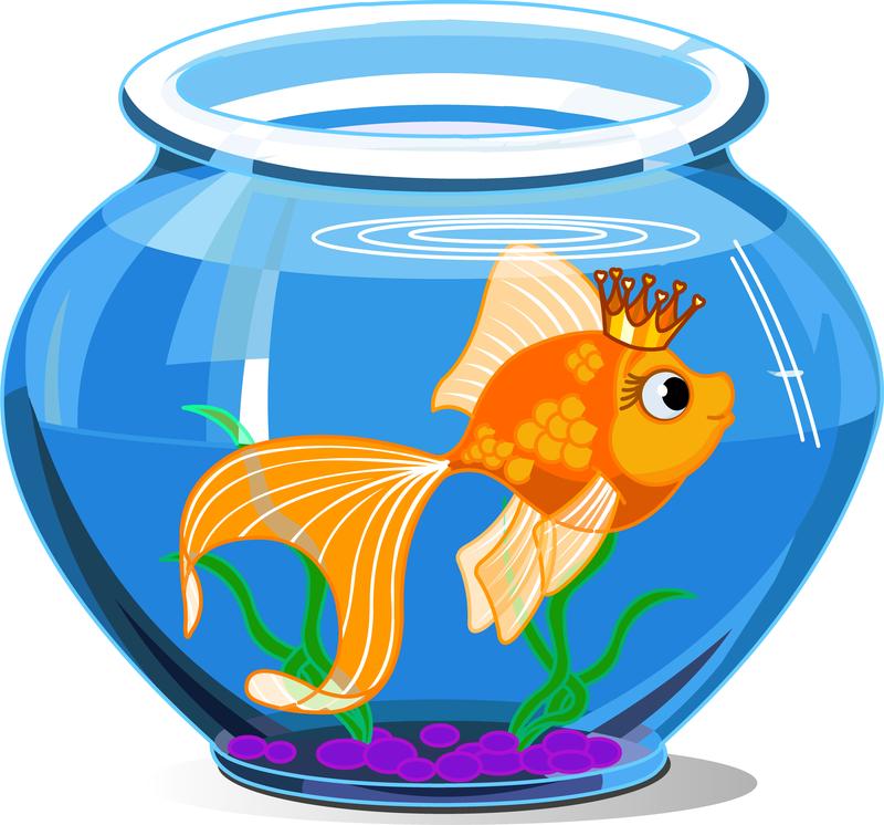 Grficos de pez de colores