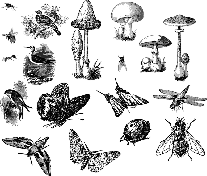 Illustrated bugs and insects set