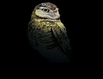 Owl libres del vector
