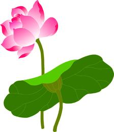 Ilustração de lótus isolada
