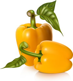 Varias frutas vectoriales