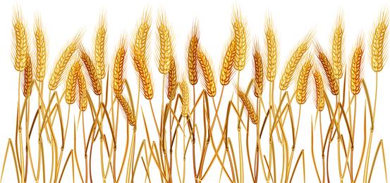 Vetor de trigo amarelo 02