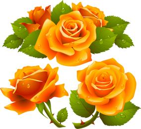 Lo que un hermoso vector de rosas