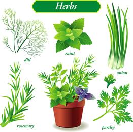 Vector de vegetales verdes delicados
