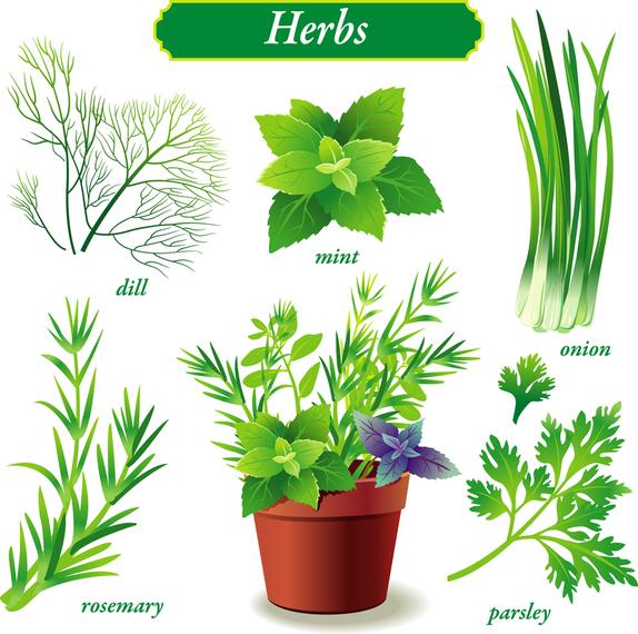 Delicate Green Vegetables Vector