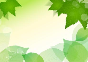Primavera fresca verde folhas ilustração vetorial
