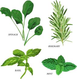 Herbal Leaves 03 Vector