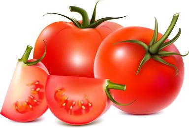 Vector de tomates