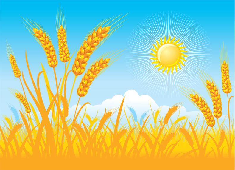 Αποτέλεσμα εικόνας για field wheat